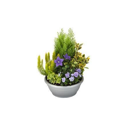 Arrangement of outdoor plants