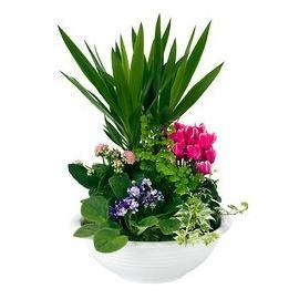 Arrangement of indoor plants