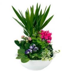 Arrangement of indoor plants