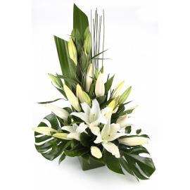Lilium arrangement