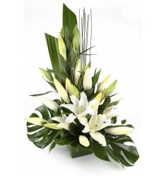 Lilium arrangement