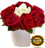 Roses in Pot