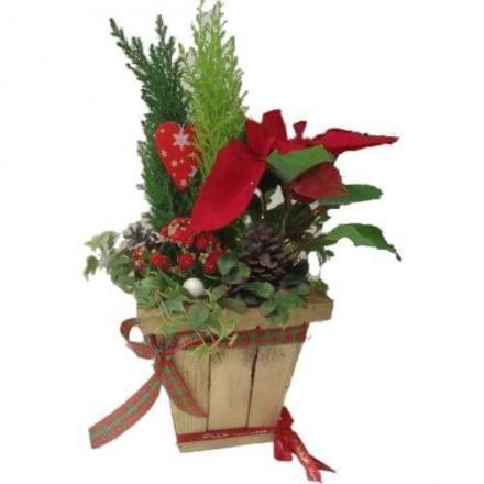 Χριστουγεννάτικο κασπώ με φυτά