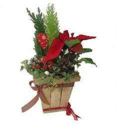 Christmas pot with plants