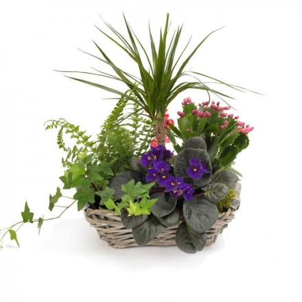 Elegant garden basket(F)