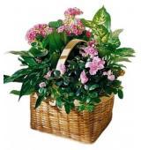 Καλάθι με διάφορα φυτά εποχής
