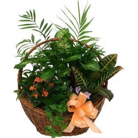 Ο μικρός Κήπος - Διάφορα Φυτά