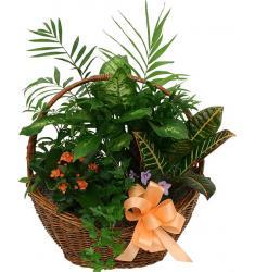 Ο μικρός Κήπος - Διάφορα Φυτά (μόνο για Ελλάδα)