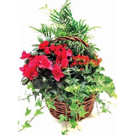 Plants Arrangement in Basket