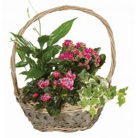 Καλάθι flowering  (μόνο για Ελλάδα)