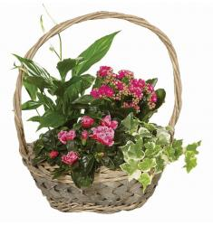 Basket flowering