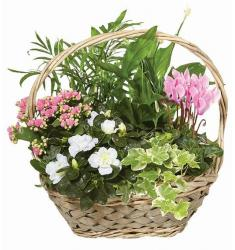 Basket flower garden