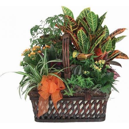 Καλάθι Vegetation