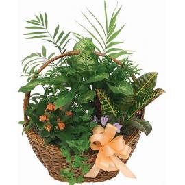 Καλάθι πράσινα φυτά  (μόνο για Ελλάδα)