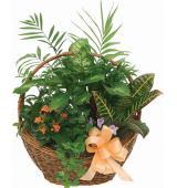 Καλάθι πράσινα φυτά