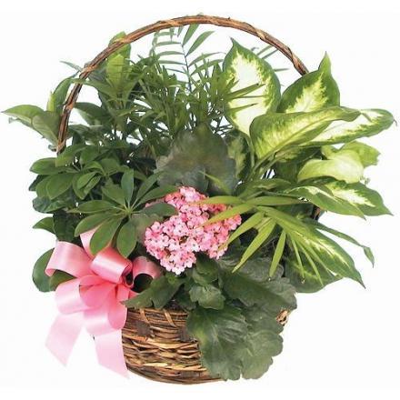 Green & flowering plants basket