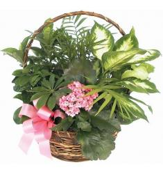 Green & flowering plants basket