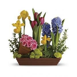 Spring Favorites  (Αμερική)