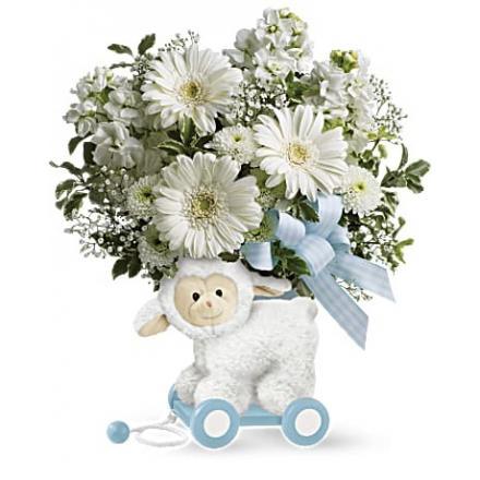 Sweet Little Lamb - Baby Blue (Αμερική)