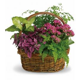 Secret Garden Basket (Αμερική-Καναδάς)