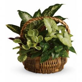 Emerald Garden Basket (Αμερική-Καναδάς)