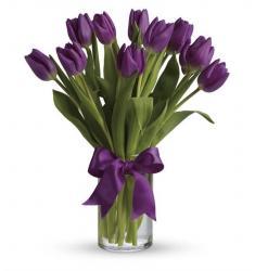 Passionate Purple Tulips  (Αμερική-Καναδάς)