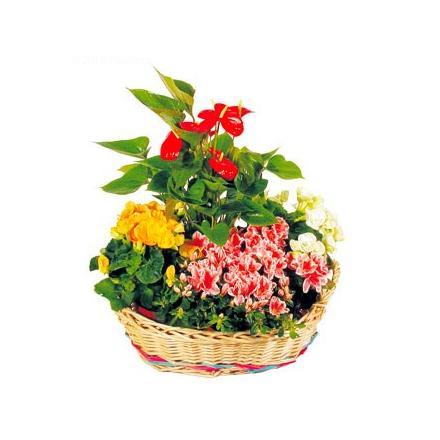 Σύνθεση φυτών σε ένα καλάθι