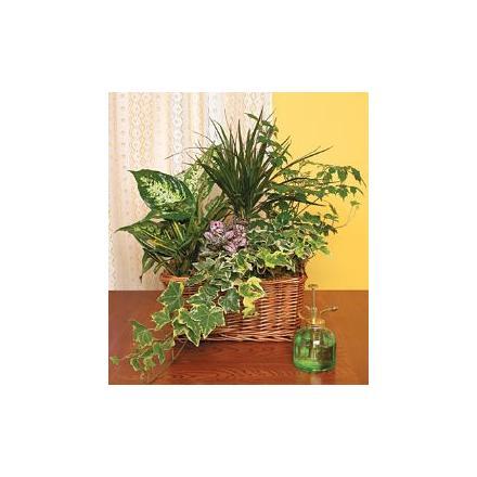 Plants arranged in a basket - HAPPY DAY