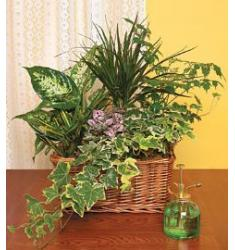 Plants arranged in a basket - HAPPY DAY
