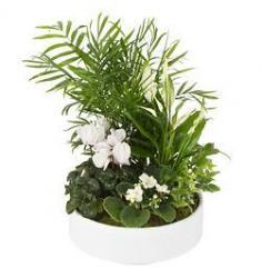 Σύνθεση με Φυτά εσωτερικού χώρου (CH)