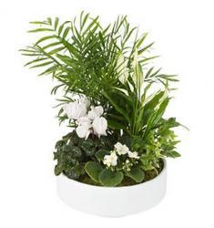 Arrangement of indoor plants (CH)