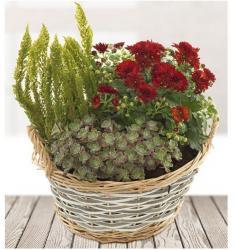 Σύνθεση Φυτών (UK)