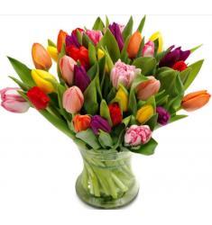 Tulip Temptation (G)