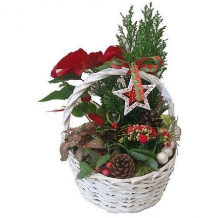 Χριστουγεννάτικο καλάθι με φυτά
