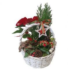 Christmas  Plant Basket