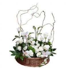 Condolences arrangement (SR)