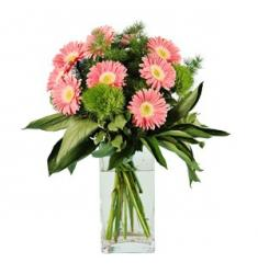 Bouquet of Gerbera (IT)