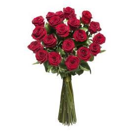 Red long stem roses