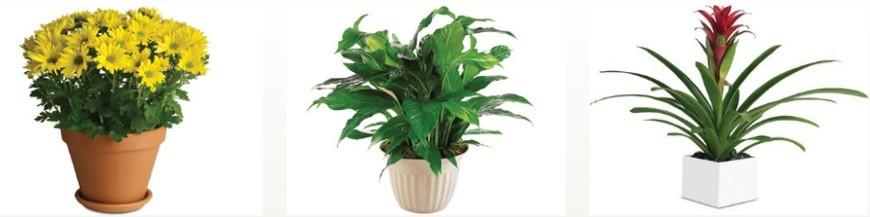 Plants-Arrangements-Baskets
