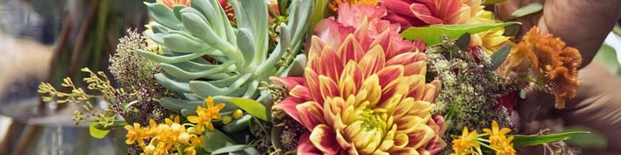 Arrangements of flowers- plants, Plants