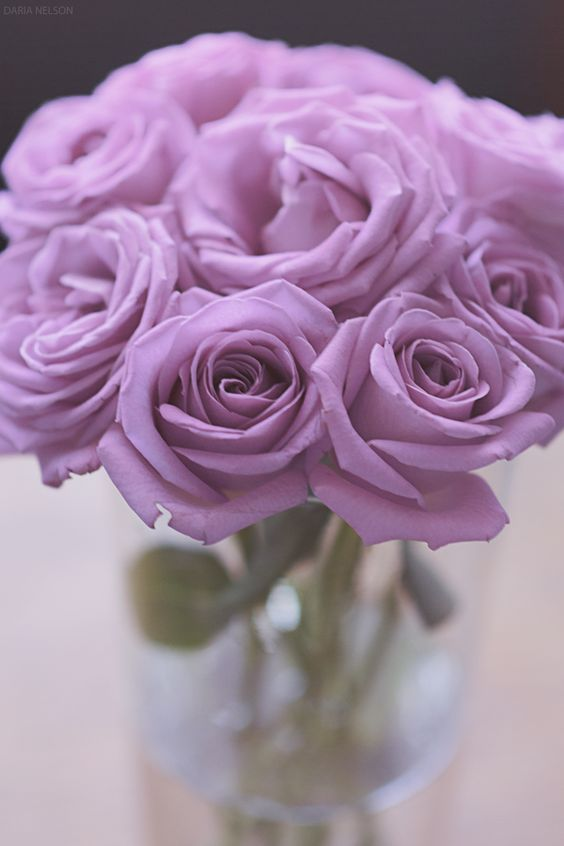 cosmoflora_lila_roses