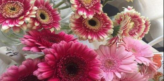 Gerbera, the flower that makes the mood!